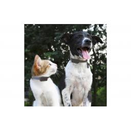 GPS-Tracker für Katzen und Hunde inkl. Befestigungsclips