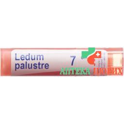 Boiron Ledum Palustre в гранулах C 7 4г