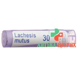Boiron Lachesis Mutus в гранулах C 30 4г